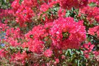 220 Botanischer Garten Ein Gedi