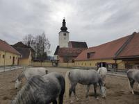 Christliche Partnersuche im TEST 2020 - davidebenjamin.com