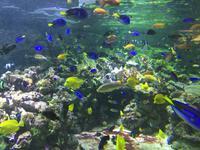 122 Unterwasserzoo in der Dubai Mall