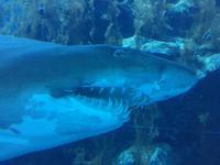 145 Aquarium in der Dubai Mall