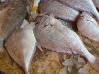 Sharjah Fischmarkt