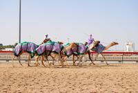 Kamelrennbahn in in Dubai