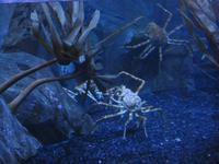 Im Aquarium in der Dubai Maill