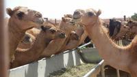Ausflug nach Al Ain - Rundreise Arabische Emirate