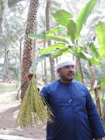 auf der Palmenfarm in Al Ain