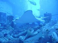 Aquarium im Hotel Atlantis the Palm