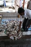 0099 auf dem Fischmarkt in Sharjah