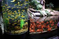 0140 im Unterwasser-Zoo in der Dubai-Mall