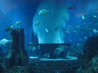 im Atlantishotel auf der Palmeninsel