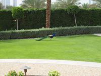 Dubai - Palast