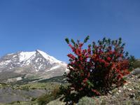 Wanderung Laguna y Base de las Torres in Torres del Paine - Patagonien (18)
