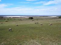 Halbinsel Valdés: Salzsee