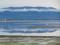 Patagonien - Laguna Nimez in El Calafate