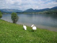Am Hallstätter See