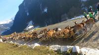 Eberhardt TRAVEL Winterreise in den Kitzbueheler Alpen/Brixental/Tirol - Wildpark Aurach