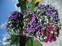 Toller Blumenschmuck in Haus
