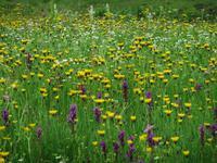 Sommerwiese auf der Ursprungalm