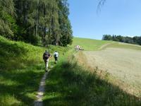 Auf dem Weg zum Gmunderberg