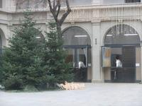 In der Hofbrug haben auch die Lipizzaner ihren Weihnachtsbaum