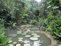 Botanischer Garten von Singapur