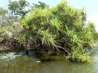 Grosse Australien Rundreise 2013 - Kakadu Nationalpark Northern Territory Yellow Waters