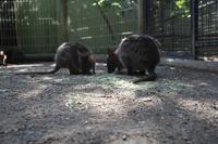 Featherdale Wildlife Park – Kängurus