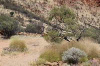 Alice Springs – Desert Park