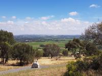 Weinberge Barossa Valley