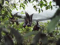 Rainforest Wildlife Habitat