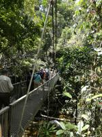 Daintree Nationalpark und Mossman Schlucht