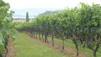 Coromandel Halbinsel, Weinprobe in Cooks Bay