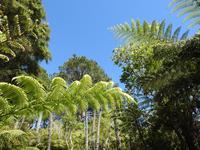 Coromandel Halbinsel Neuseeland