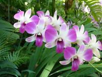 Orchideen-Pracht im Botanischen Garten