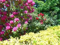 Flora in den Blue Mountains