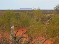 Fahrt von Alice Springs nach Yulara (Sanddüne im Outback - Blick auf den Mount Conner)