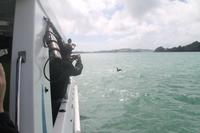 Bay of Islands - Whalewatching Tour