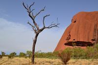 Uluru - Spaziergang zum Wasserloch