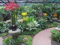Botanischer Garten - Orchideengarten