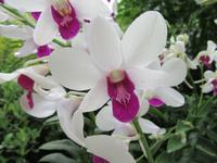 Singapur - Orchideengarten