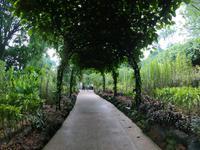 Botanischer Garten - Singapur