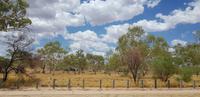 Rundfahrt durch Alice Springs