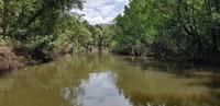 Crocodile Cruise auf dem Daintree River