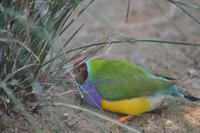 Featherdale Wildlife Park (46)
