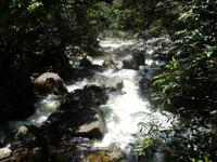 Daintree NP - Mossman Gorge