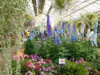 Melbourne (Fitzroy Gardens - Conservatory)