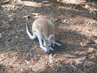 Wildlife Habitat Park in Port Douglas