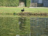Gärten von Annevoie