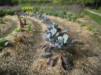 Garten von Annevoie