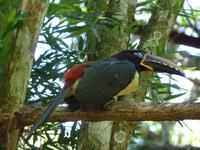 218 Iguazu - Vogelpark Parque das Aves