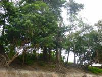 Im Amazonas-Gebiet